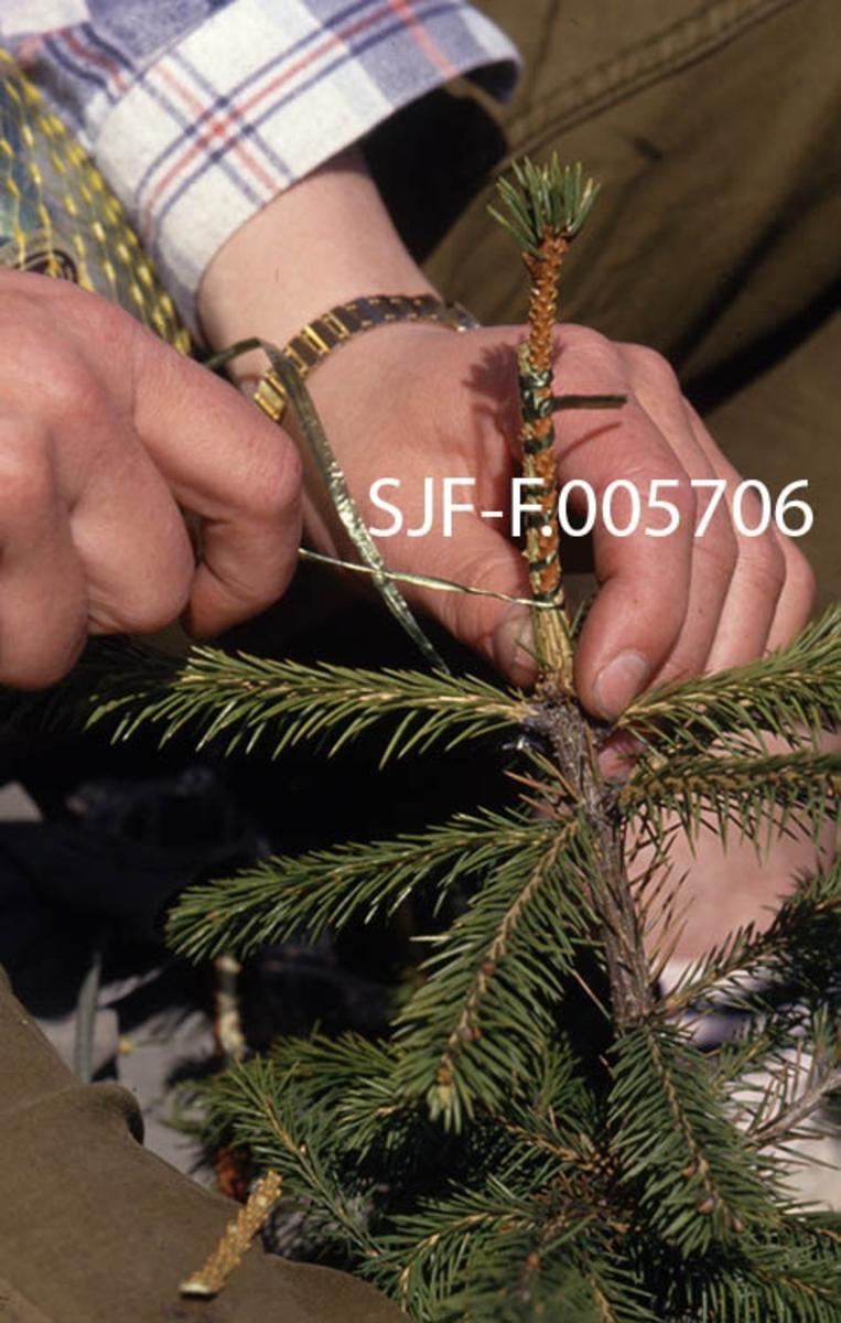 Podingsarbeid ved skogplanteskolen på Sønsterud i Åsnes i Hedmark.  Dette arbeidet ble utført som et ledd i produksjonen av «podinger» til frøplantasjen på Sanderud i Stange.  Dette er et nærbilde som viser hvordan en podekvist fra et elitetre bindes til toppen av en grunnstamme som ikke nødvendigvis hadde spesielt gode genetiske egenskaper.  Podekvistene ble levert av Norsk institutt for skogforskning, der det fantes en avdeling som arbeidet med planteforedling.  Medarbeidere derfra oppsøkte elitetrær i relevante distrikter og høydelag.  Podekvistene ble hentet fra toppene av disse trærne.  Ved å pode slike skudd på grunnstammer sikret man seg at «podingen» bar videre det genetiske materialet fra det nevnte elitetreet.  Når mange slike podinger fra trær med ønskete egenskaper (rettvokste, høye stammer, fin kvistsetting med gode greinvinkler osv. ) ble plassert sammen i en frøplantasje mente man å få kongler med frø som hadde gode genetiske egenskaper, og dermed bedre muligheter for å skape framtidig kvalitetsskog.  Denne strategien har vist seg å gi gode resultater.